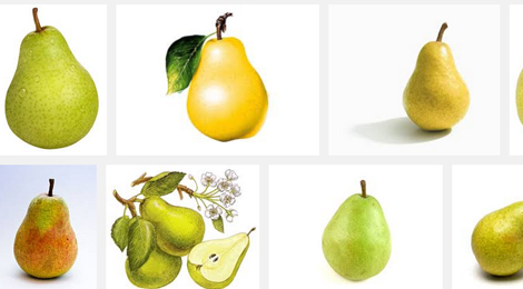 01 470x260 Create a realistic delicious pear   Illustrator tutorial
