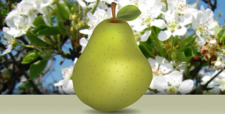 Create a realistic delicious pear - Illustrator tutorial