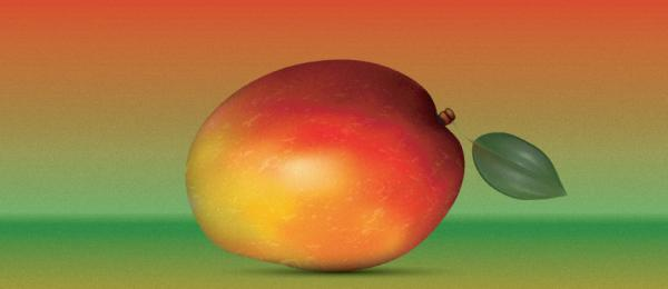 How to create a Realistic Mango in Adobe Illustrator?